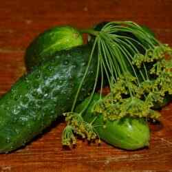 Огурцы малосольные рецепт хрустящие быстрого приготовления