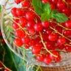 Смородина красная на зиму заготовки лучшие рецепты